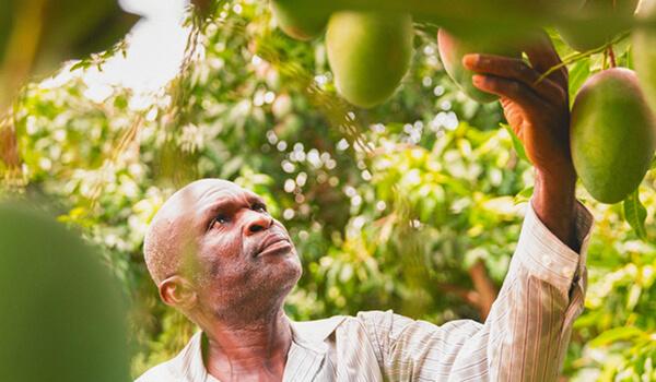 Kultsnack_Nachhaltigkeit_Produktion_Ghana