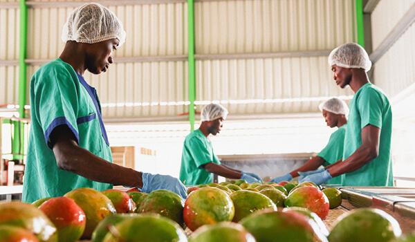 Kultsnack_Nachhaltigkeit_Produktion_Ghana2